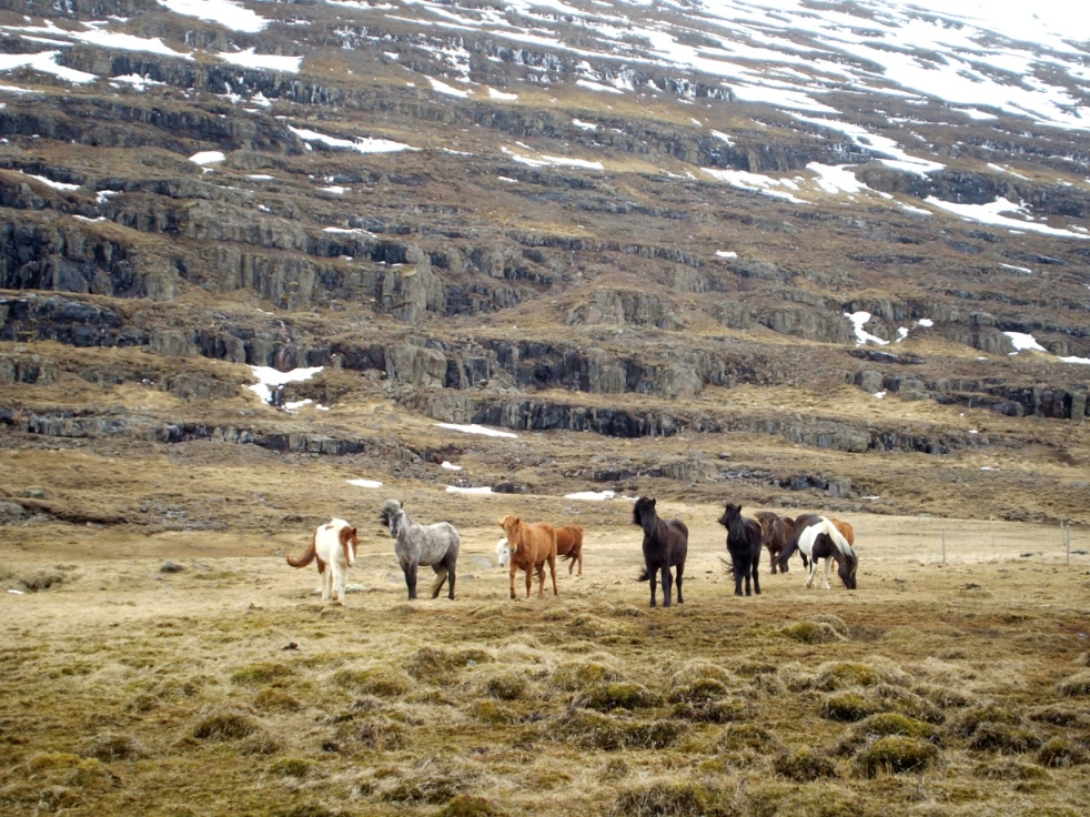 several stout horses stand in a group before a mountainside